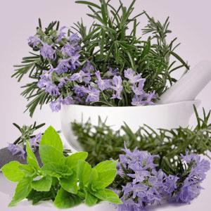 Rosemary Mint Type Fragrance Oil