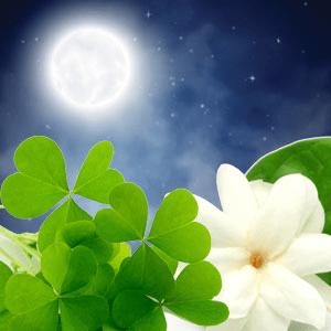 Sun Moon and Stars Fragrance Oil