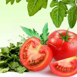 Tomato Leaf Corriander Fragrance Oil