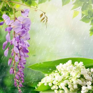 Rain Fragrance Oil
