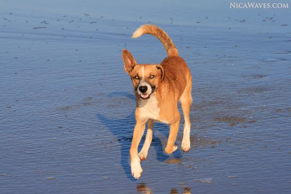 dogs in Popoyo
