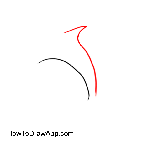 How to draw a dolphin 03