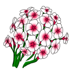 Phlox flowers drawing easy for kids