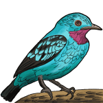 How to draw a bluebird for kids step by step