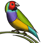 Lovebird drawing tutorial step by step