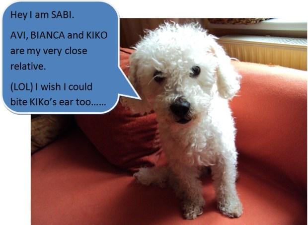 our dog Sabi