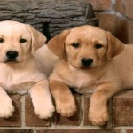 medium dog breeds