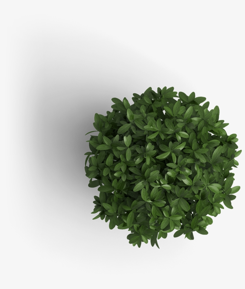 Object Plant 1 Plant Top View Png Transparent Png 1500x1500 Free Download On Nicepng