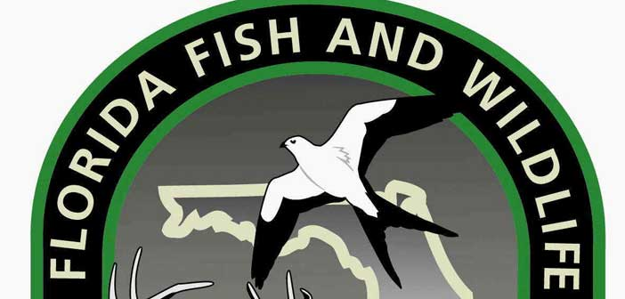 FWC Saltwater Fishing YouTube Channel has all your fishing tips