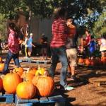 2016 Pumpkin Patch now open in Niceville