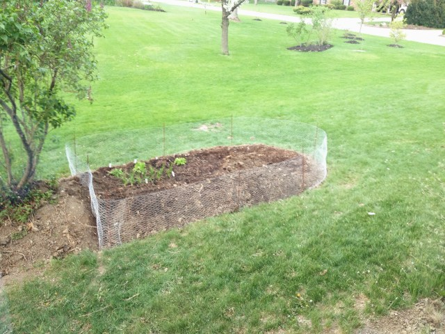 Installed a bunny barrier, those lil guys won't be distorting this garden
