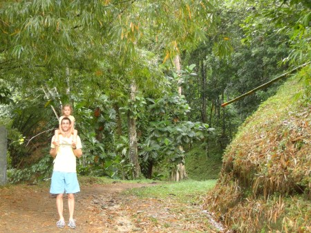 Jungle Vs Forest