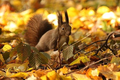 Fall Time Wallpaper Squirrels In Autumn Cutesy Nicu S Photoblog