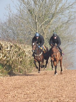 The woodchip gallops