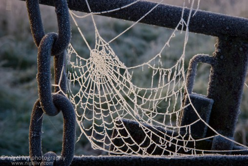 Frosty Chain & Spider Web