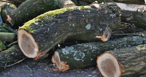 Wood Exporters, 13 states governments move to regenerate Nigeria's forests