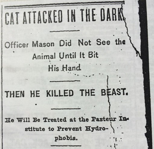 CAT ATTACKED IN THE DARK