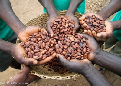 Cocoa farmers holding dried cocoa beans, Ghana.