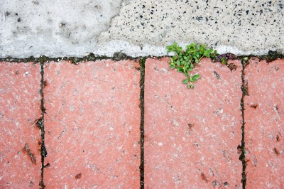 New growth breaking through paving