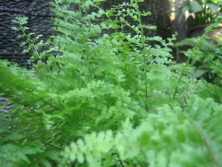 FERN...the most beautiful leaves ever.. (3/6)