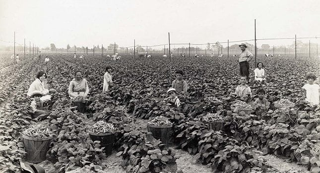 """New Jersey still maintains its name, """"The Garden State,"""" as the state boasts more than 733,000 acres of farmland. We are among the top-10 states in the production of cranberries, blueberries, apples, sweet corn and more. This image shows that after many years of agricultural innovation, farming remains a basic process of planting seeds and reaping produce. Photo Credit: New Jersey State Archives, Department of State"""