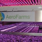 AeroFarms' state-of-the-art technology uses LEDs and aeroponics to grow greens in its indoor vertical farm.