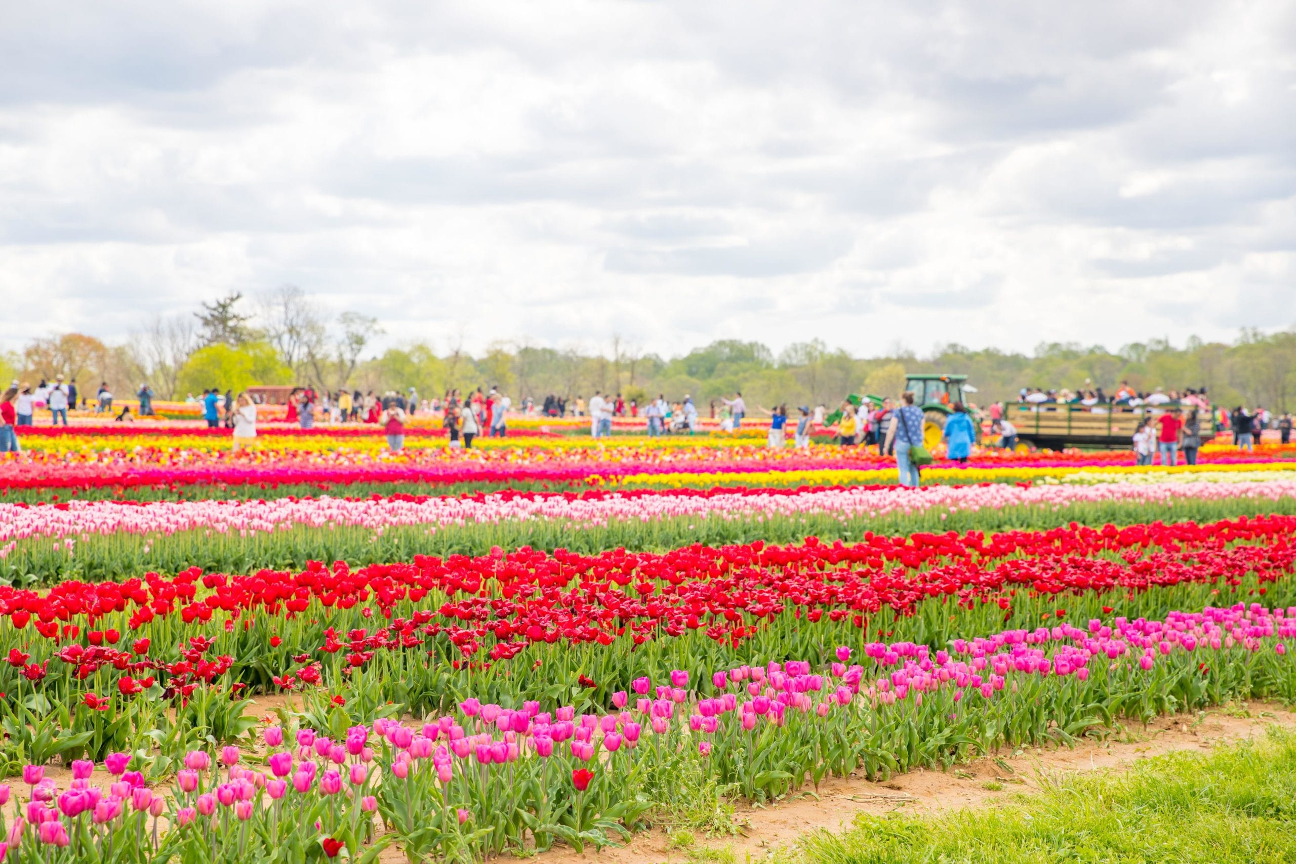 This Tulip Farm Is One Of Nj S Most Beautiful Spring Spots Nj Family