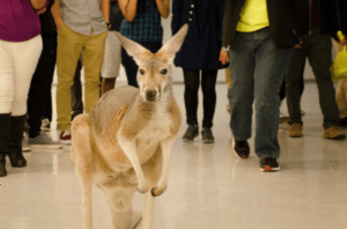 Zoologist Creates Coolest petting Zoo Ever