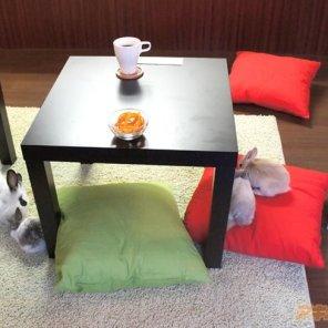 japanski cafe sa zecevima