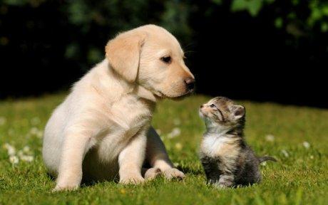 macka i pas culo mirisa