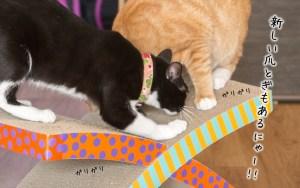 facebookクリスマス猫-04