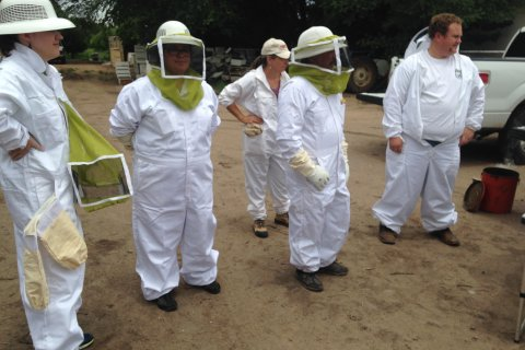 Honeybee Survey