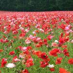 レコード大賞で歌った松田聖子の「秘密の花園」にコレジャナイ感