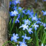 札幌百合が原公園の開花スケジュールと花の写真