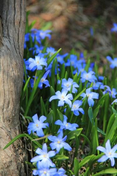 本日、百合が原公園で撮影した青い花。(名称不明)