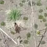 アマゾン奥地に未確認の部族を発見。実は我々も誰かに観測されている?!