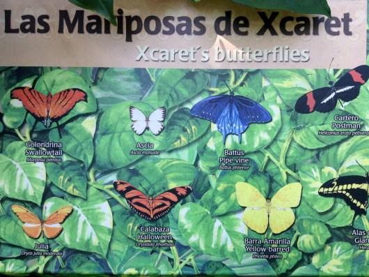Butterfly Pavilion, Xcaret