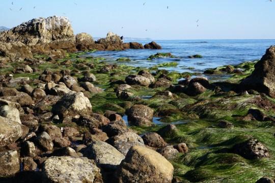 Malibu - Santa Monica National Park
