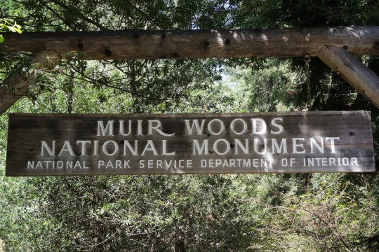 Family Day Trip to Muir Woods