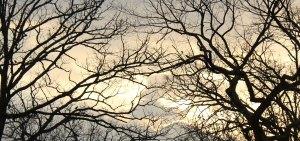 Winter-Sunrise-Bare-Trees-e