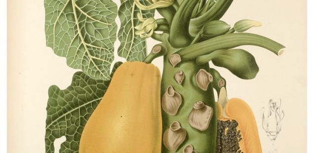Joni Rose's 500 Words | The Papaya Farmer's Daughter Speaks Up