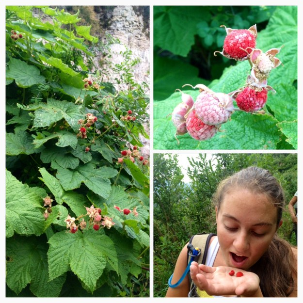 eating wild raspberries