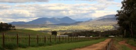 King Valley - Photo by Wayne Jansson