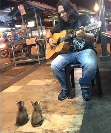 Kitties Come To Listen