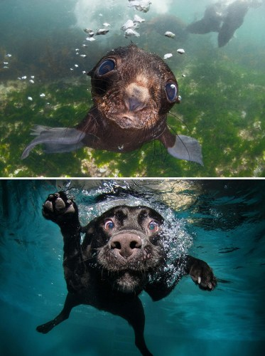 funny-seals-look-like-dogs-15-574d85cedf0a7__880