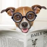 How to Treat Dog Diarrhea? (At Home)