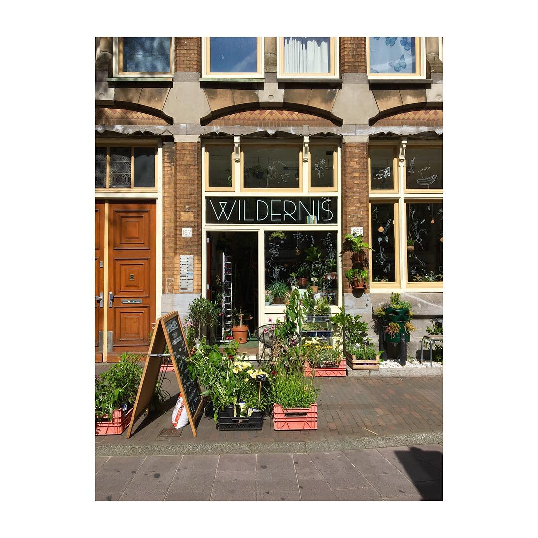 Plant Shop Amsterdam I Visited Wildernis Yesterday An Urban Plant Shop In