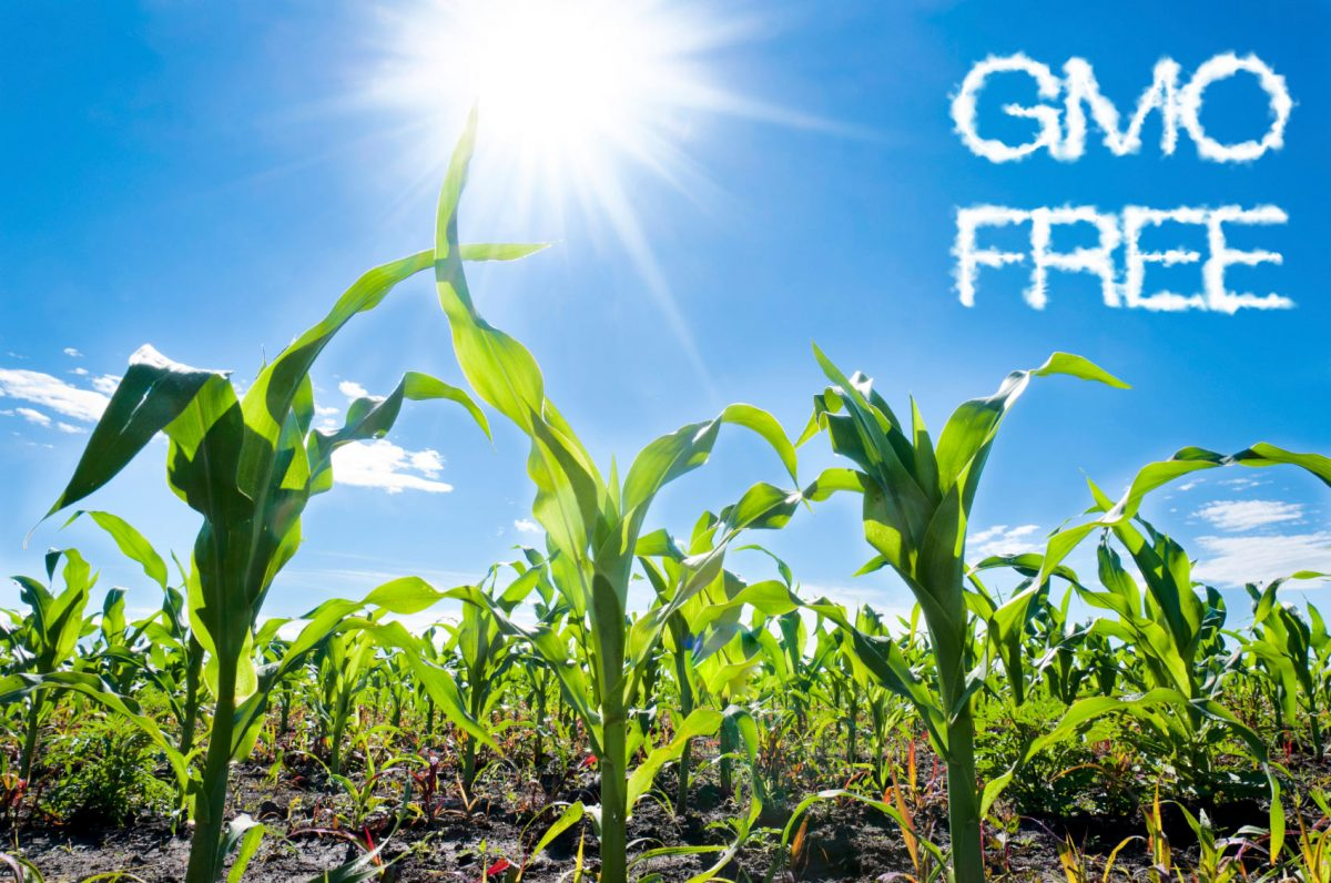 Agricultural Cultivation Ireland Further Restricts Cultivation Of Gmos To Preserve