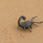 9 grammatical mistakes you need to stop making before I throw live scorpions at you