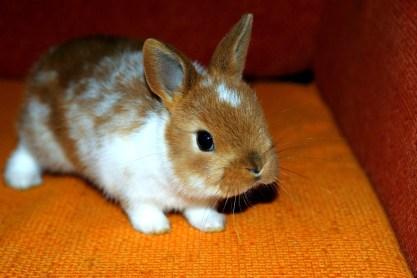 bunny-1567479_960_720
